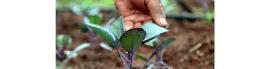 Communauté de pratique - Agriculture familiale et Agroécologie pour la Région Afrique
