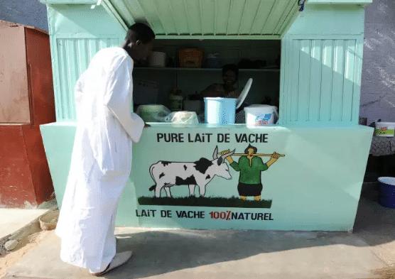 Article - Au Sénégal, la filière laitière se noie sous les excédents de lait européens