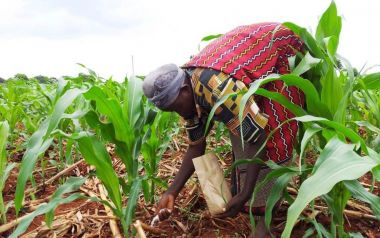 Article - Farmers' responses to warming early in growing seasons can affect yields