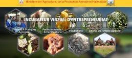 Article - Togo / e-learning pour les centres de formation agricole et rurale