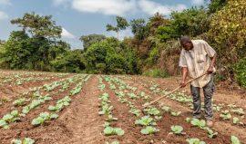 Rapport - Les agriculteurs pourraient augmenter considérablement leur productivité en conservant la biodiversité des sols - Rapport de l'UICN