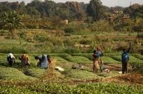 Rapport - Le potentiel de l'agroécologie pour renforcer la résilience des moyens de subsistance et des systèmes alimentaires face au changement climatique