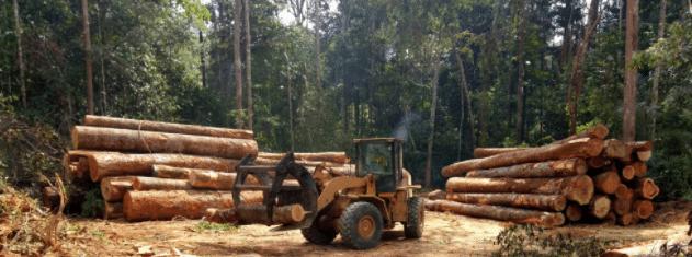 Article - En Côte d'Ivoire, des forêts communautaires pour un défi de taille