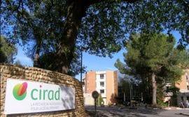 Article - Le Cirad veut utiliser les nouveaux OGM avec prudence