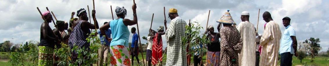 Fiches d'expériences - http://www.gtdesertification.org/Actualites/Avaclim-au-Senegal-decouvrez-5-initiatives-agroecologiques