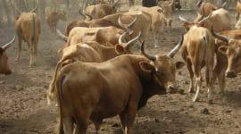 Bulletins de surveillance pastorale - aôut septembre 2020