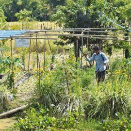 De nouvelles ressources pour découvrir l'approche du Gret en matière d'agriculture