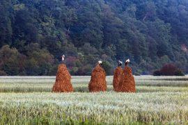 Sondage - Consultation mondiale sur les défis des agriculteurs familiaux et des petits producteurs dans le cadre de la COVID-19: apports pour des stratégies de relance