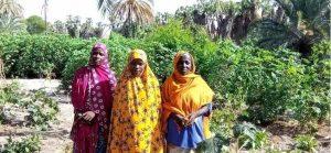 Note - Les femmes dans la formation professionnelle des jeunes agriculteurs dans la région de Diffa.