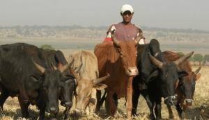 Article : Le changement climatique à l'origine des conflits agriculteurs-éleveurs