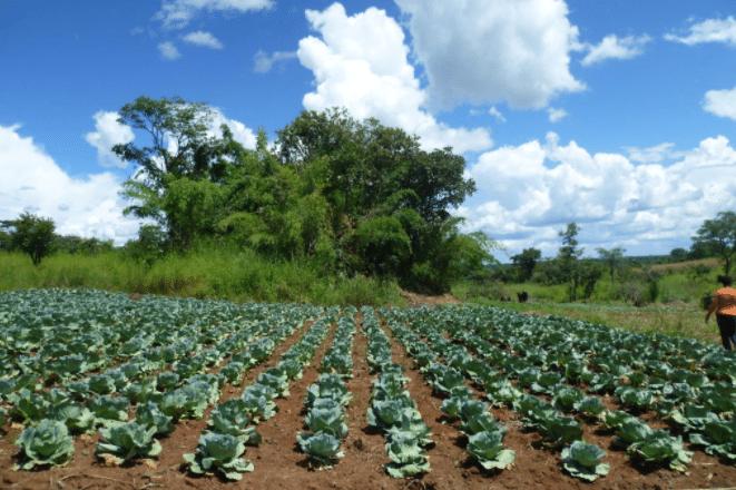 Article - Mieux aider les petits agriculteurs face aux changements climatiques
