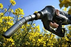Bulletin de veille N°138 Spécial Agrocarburants - janvier 2009