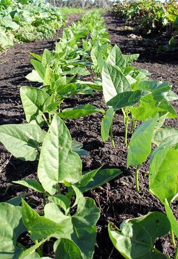 Monsanto - Acte de Modernisation de la Sécurité Alimentaire 2009