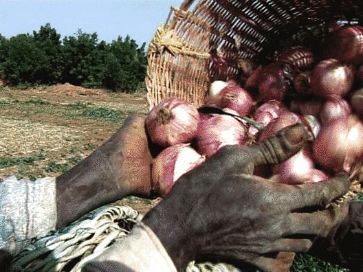 Niger - 14 et 15 mai - Les journées nationales de l'oignon 2009