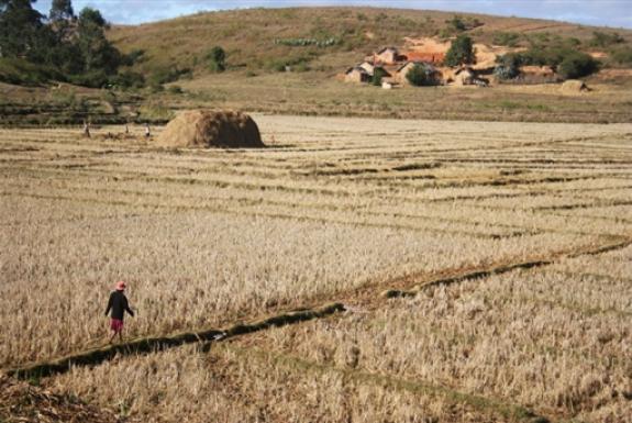 Les dangers de la ruée sur les meilleures terres d'Afrique