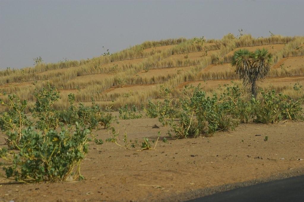 De la dune fixée à la cuvette retrouvée : l'exemple du projet d'appui à la gestion des ressources naturelles au Niger