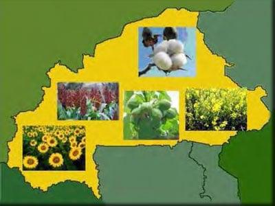 Opportunité de développement des biocarburants au Burkina Faso