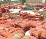 Avec un stock de 40 000 tonnes : Le Sénégal autosuffisant en oignons