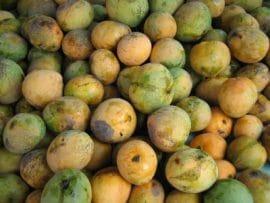 La filière mangue : 30