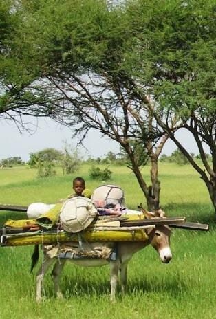 Une contribution à la compréhension de l'élevage mobile dans les régions de Zinder et de Diffa (Niger)