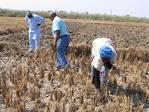 Agriculture malienne : Le développement du monde rural