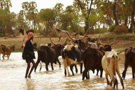 Bulletin de veille n°149 - Pastoralisme