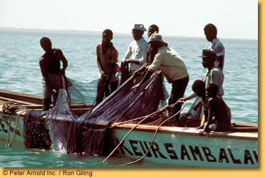 Préserver les pêcheries africaines