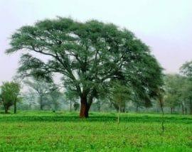 Cultiver à l'ombre des arbres