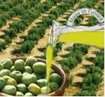 Tunisie : Evolution de l'activité agricole