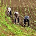 Le Maroc dépasse 10 millions de tonnes dans sa production céréalière, un record