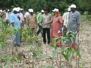 Recherche agronomique au Mali : Le temps des cultures hybrides