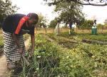 Part du budget allouée à l'agriculture : Etat et Ong ne parlent pas le même langage