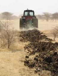 Récupération mécanique des sols dégradés à des fins sylvo-pastorales : une technique efficiente en zone pastorale sahélienne