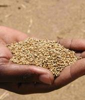 Aide à l'agriculture : des promesses aux réalités de terrain