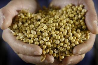 Aux Etats-Unis, la généralisation des OGM aboutirait à une surutilisation de pesticides