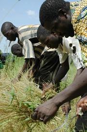 Mali : Les craintes de spoliation de terres perdurent