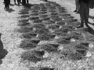 Mécanisation de la technique du zaï manuel en zone semi-aride