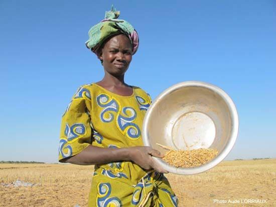 L'Initiative riz : des subventions contre la crise alimentaire
