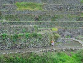 Loi de finances 2010: L'agribusiness mis en avant