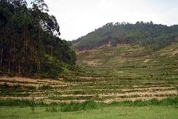 RWANDA: Des mesures pour stimuler l'agriculture portent leurs fruits