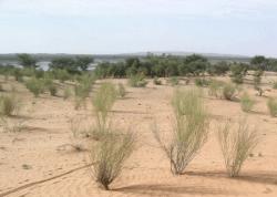 BURKINA FASO: Les agriculteurs agissent face au changement climatique