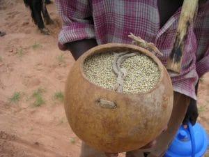 Semences en Afrique : les professionnels ont rendez-vous à Bamako