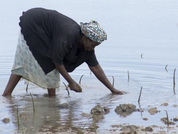 Commerce des Semences (AFSTA) : Cap sur la relance de l'industrie Ouest-Africaine