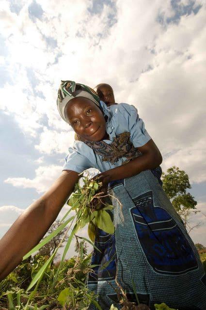 """Révolution verte au Malawi : les dessous du  """"miracle"""""""