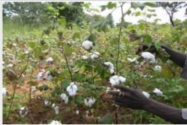 Bénin: l'agriculture menacée par les changements climatiques