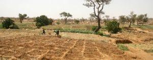 Afrique : l'urgence agricole