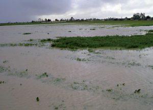 Maroc - intempéries : l'excès de pluies pourrait conduire à une récolte céréalière moindre que prévu