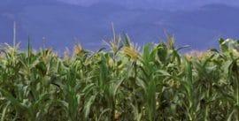 Campagne agricole 2009-2010 Le ministre Grégoire Akoffodji présente un bilan satisfaisant