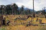 Les paysans réhabilitent des forêts fossiles