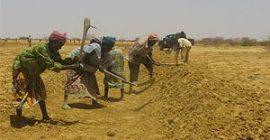 Mali:Perspectives sur la sécurité alimentaire avril à septembre 2010